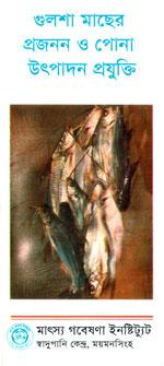 গুলশা মাছের প্রজনন ও পোনা উৎপাদন প্রযুক্তি