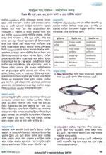 সামুদ্রিক মাছ সারডিন: অর্থনৈতিক গুরুত্ব