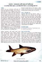 মহাশোল: বাংলাদেশের একটি সুস্বাদু কার্প জাতীয় মাছ