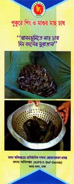 পুকুরে শিং ও মাগুর মাছ চাষ
